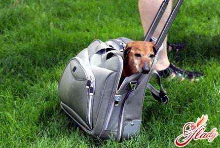 путешествие с собакой по европе