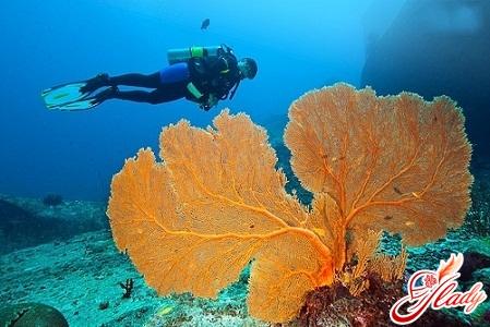 тайланд симиланские острова