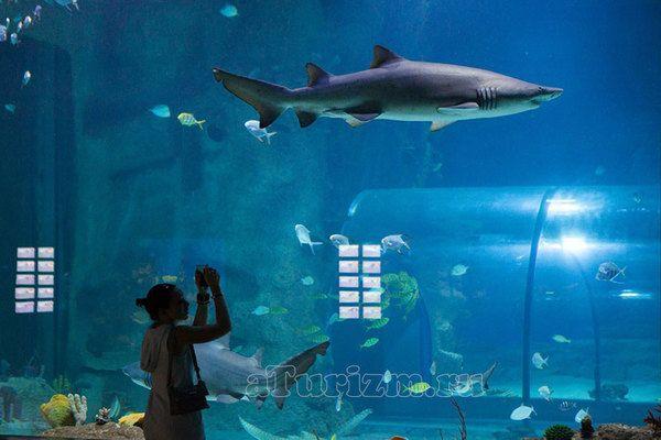 Океанариум на ВДНХ в Москве - самый большой в Европе