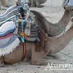 Эр-Рияд — что посмотреть в городе