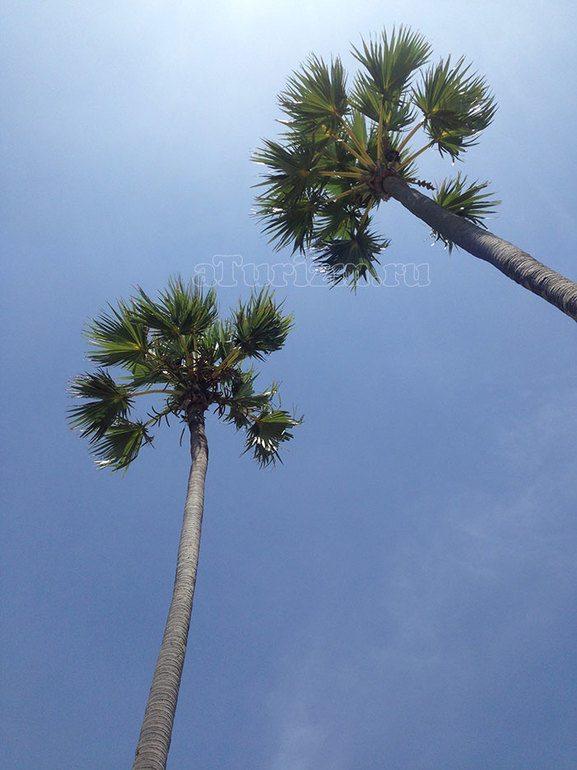 Пальма-де-Майорка достопримечательности фото