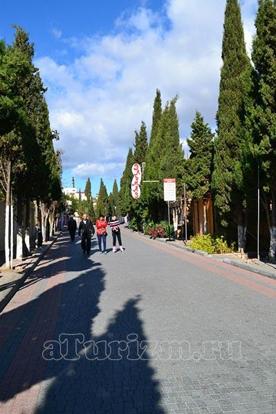 Кипарисовая аллея фото
