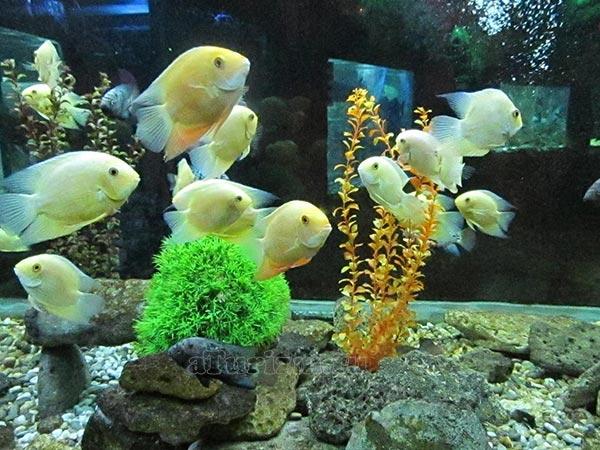 Евпаторийский-аквариум2